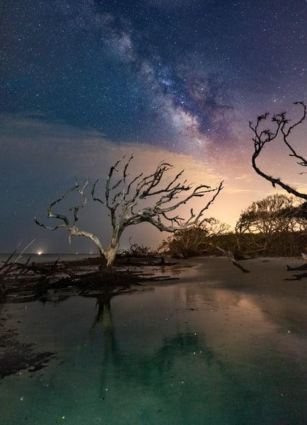 Driftwood Reflections