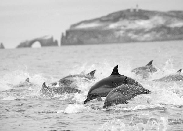 0014_Dolphins_On the Run