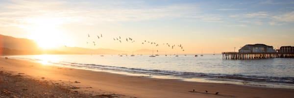Seabird Sunset in Santa Barbara 00796
