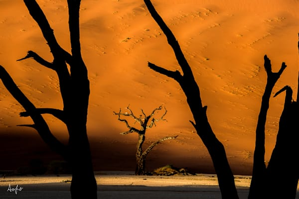 Silhouetted trees with orange sand dune in Deadvlei