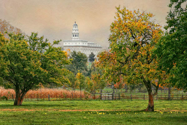 Nauvoo Temple - Apple Tree