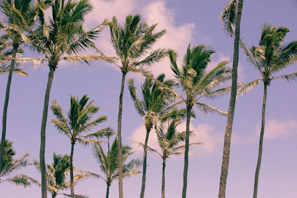 Palm Tree Fine Art Photographs