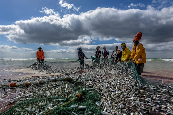 Rastafarian sardine fishermen hauling nets in a fine art photograph print