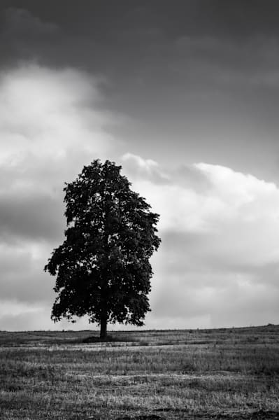 Minimalist black & white photograph of a single maple tree in an Ontario field, for sale as fine art by Sage & Balm