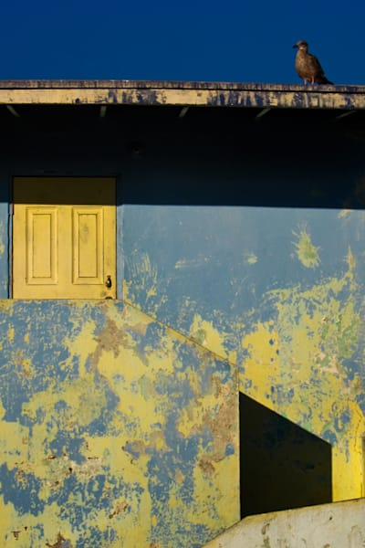 Bird on roof of yellow and blue house with peeling paint, canvas art photograph