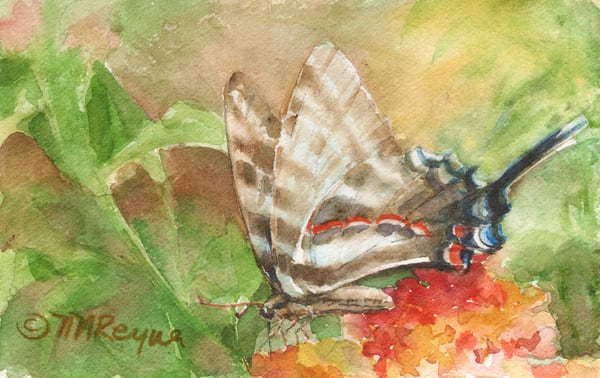 Zebra Swallowtail Art | Nancy Reyna Fine Art
