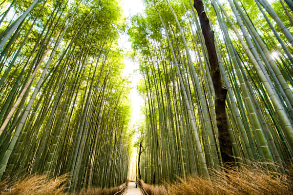 Fine art photograph of Arashiyama Bamboo Grove , Kyoto, Japan
