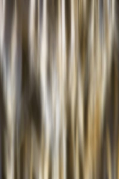"""Blurred Line"" Fine Art Photography by Stephanie Hogue"