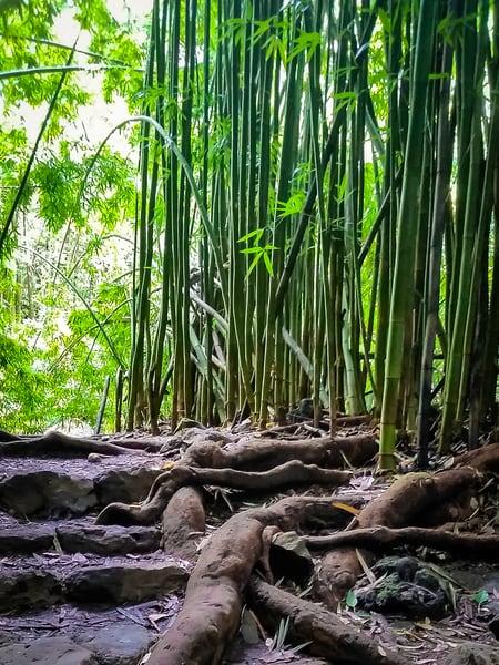 Maui Bamboo 1