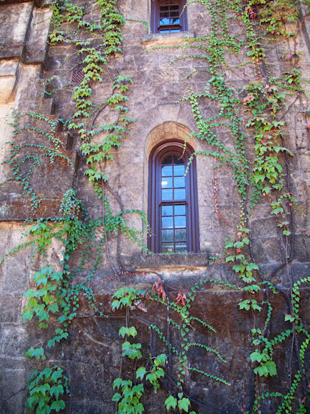 """Ivy Window"""