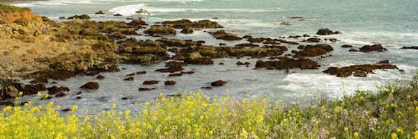 """Mustard Flower Cove"""