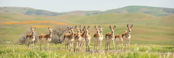 """Antelope Herd"" 2"