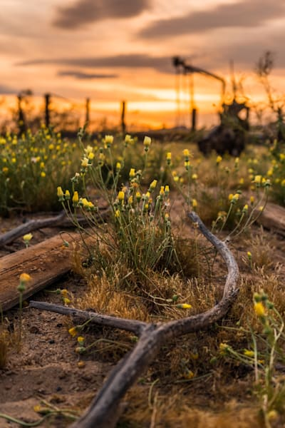 'Wildflowers & Sun Chasers' Photograph by Jess Santos for sale as Fine Art