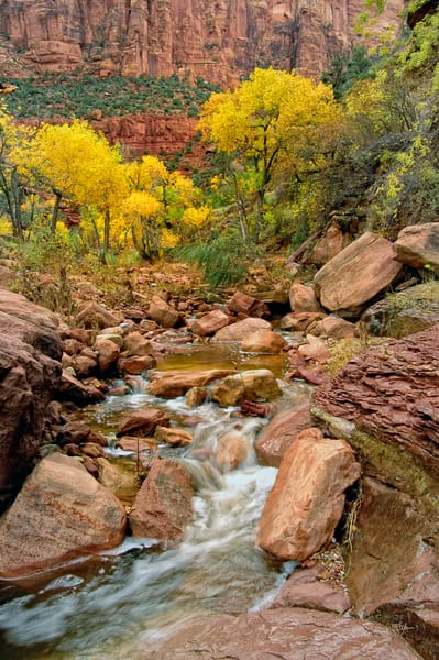 Zion Creek in Gold fine art photograph by Richard Stefani