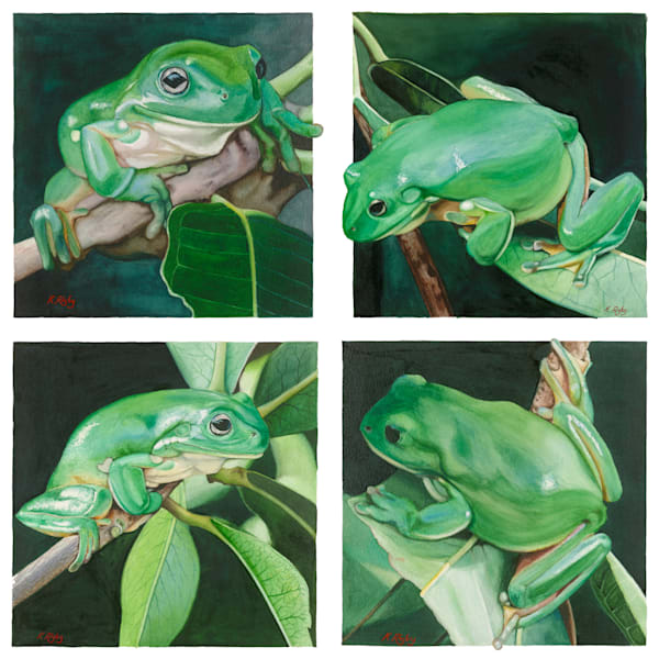 Green Tree Frog series