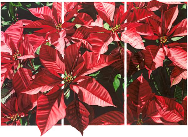 Poinsettia Triptych