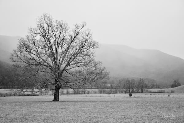 Fine art landscape photographs and prints from Nunweiler Photography in dramatic black and white.  Get 20% off your first order.