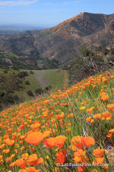 """""""Poppy Mountain Overlook 2"""""""