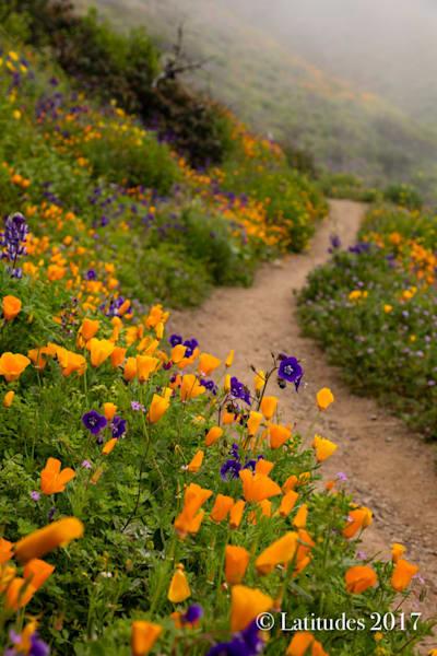 """""""Poppy Trail"""""""