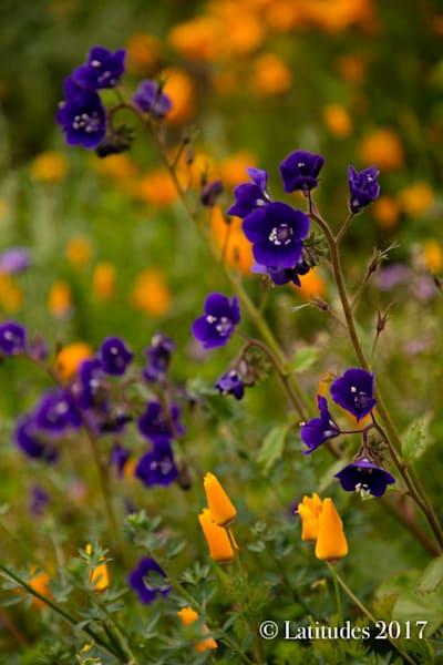 """""""Violet Wild Flowers"""""""