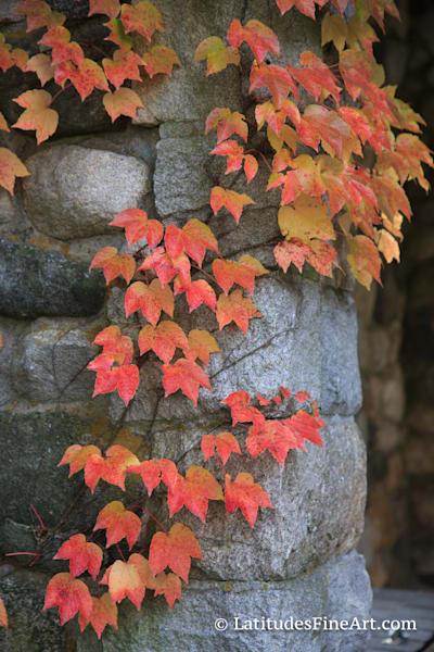 WEB AutumnIvyandStone