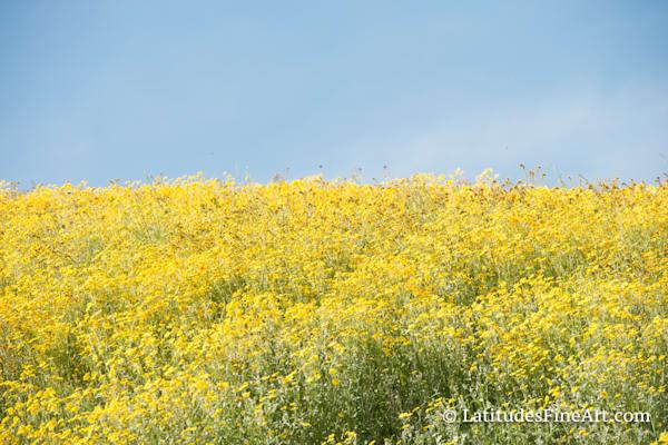 """""""Mustard Field"""""""