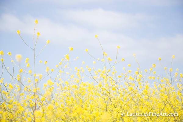 """""""Spring Mustard"""""""