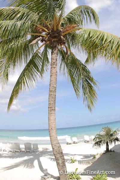 """Caribbean Palm"""