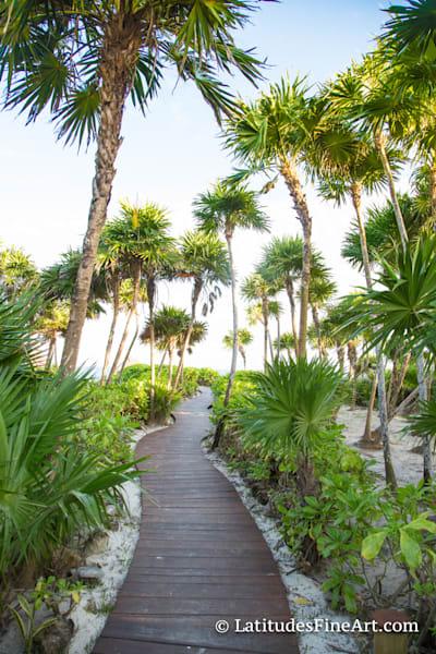 """Paradise Pathway"""