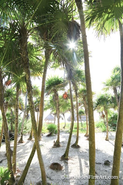 """""""Palm Tree Forest"""""""