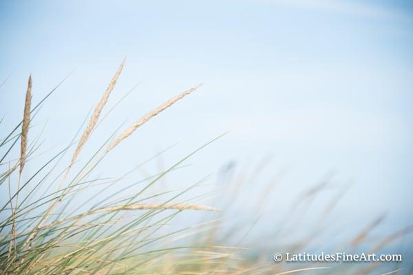 """""""Wispy Seagrass"""""""