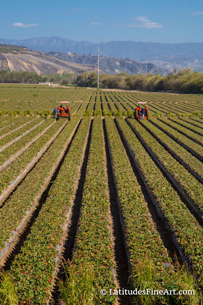 """Ventura Agriculture""-  IMG 2229"