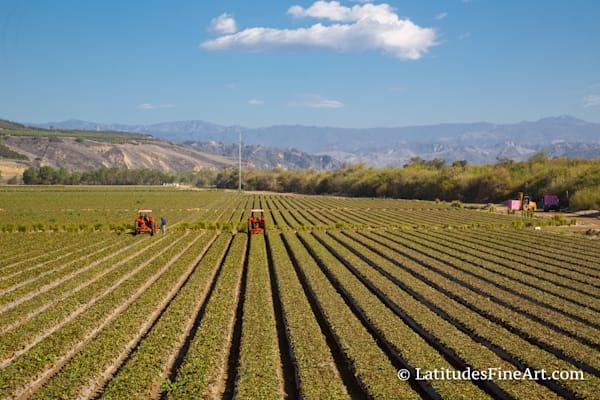 Ventura Farm Field-  IMG 2221