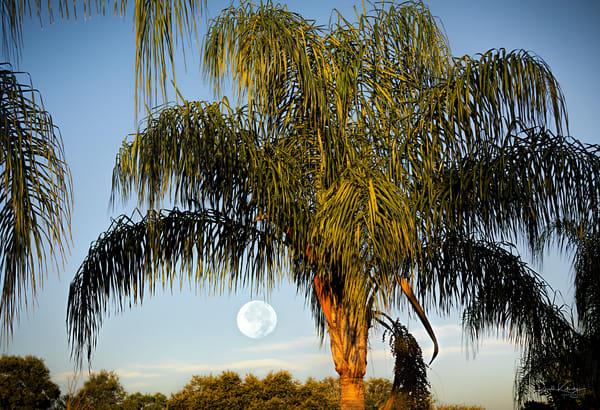 A beautiful sunrise full moon from Tampa Bay, Florida  | art photographs