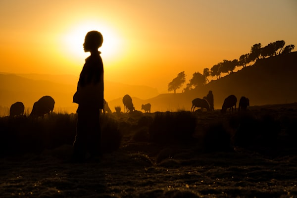 Herder in silhouette with halo and orange sun behind