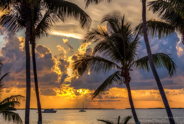 The sun sets between a beautiful set of palms in Key Largo, Florida. | art photographs