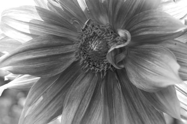 Black and White Art | Original Paintings, Photographs and Prints