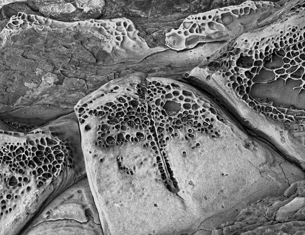 Rock Detail – Oregon Coast photograph by Richard Stefani