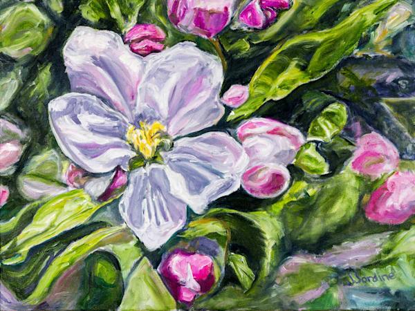 Apple Blossoms 1