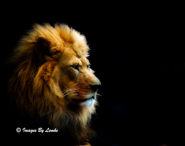 Themba Profile