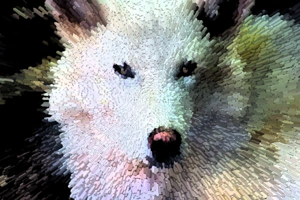 Weird Of The White Wolf Art | Oz Fine Art Studio