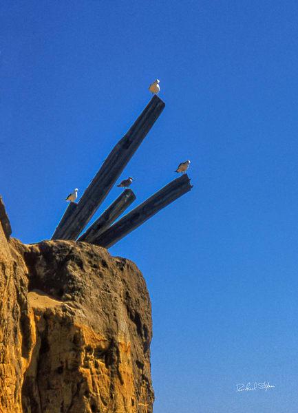 Four Seagulls photograph by Richard Stefani