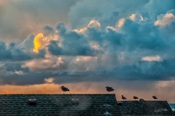 Last of the Day – Seagulls photograph by Richard Stefani