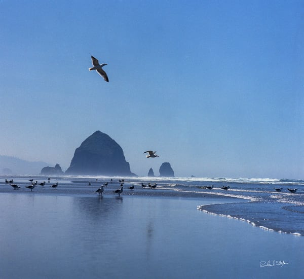 Haystack Rock with Seagulls photograph by Richard Stefani