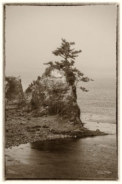 Tree on Rock – Taft, Oregon photograph by Richard Stefani