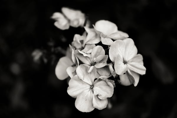 Grouping of Flowers in black and white - fine art photograph print