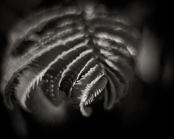 Fern in black and white - fine art photograph print