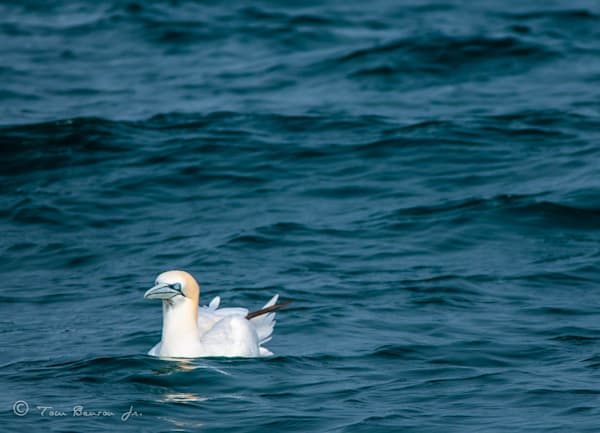 Waders-Waterfowl-Seabirds