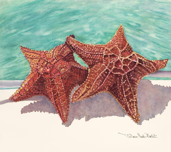 sea stars, bahamas, art, prints,