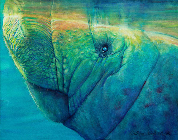 Mr. George The Manatee Art | ColleenNashBecht